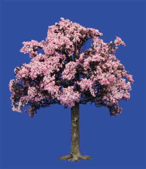 treefrog treasures small flowering cherry tree