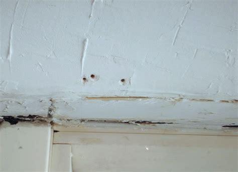 plaster ceiling repair cost plaster ceiling repair tools home design ideas