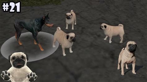 puppy sim sim pug dogs android ios gameplay part 21