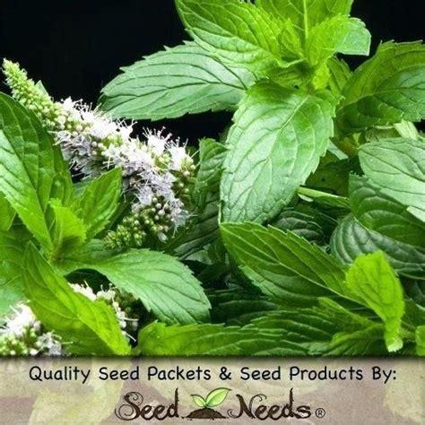 herb garden pests plants  repel mosquitoes flies