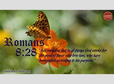 Bible Verse of the day – Romans 8:28 | Holy Bible Hebrews 12:14