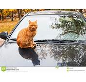 Cat On Car Stock Image  19092381