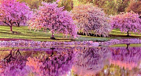 imagenes bonitas de paisajes con flores hermosos paisajes taringa