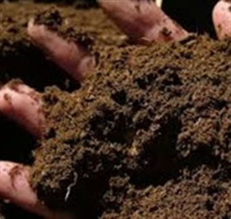 Alternatif Pengganti Pupuk Dasar Aquascape pupuk kompos alternatif penganti pupuk kimia gaya hidup