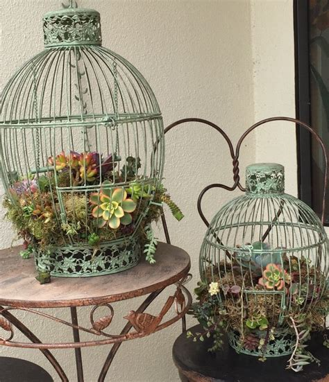 Bird Cage Planters by Diy Succulent Bird Cage Planter I Found These Bird Cages