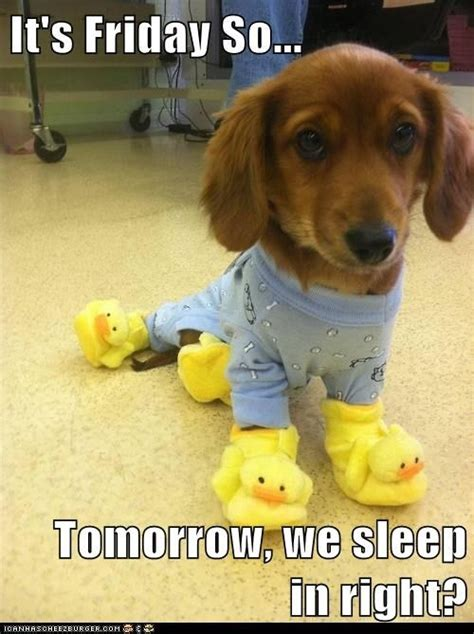 Dog Friday Meme - it s friday funny pictures dump a day