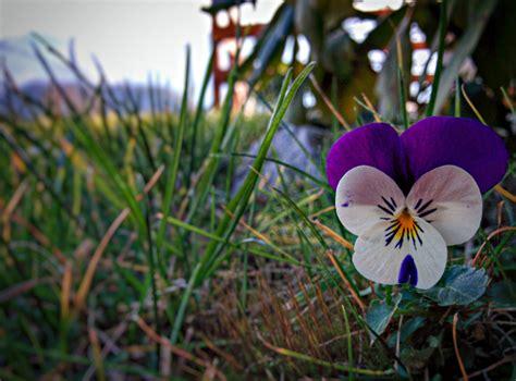 fiori dicembre fiori e sole di dicembre 2015