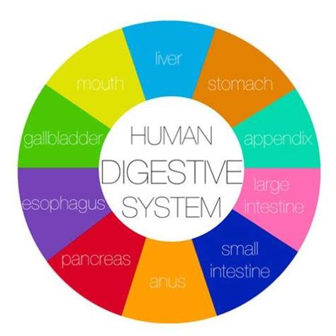 gastroenterology and clinical nutrition growth charts gastroenterology hepatology nutrition department of