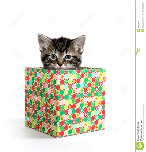Cute tabby kitten in a box stock image. Image of adorable