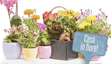 piante con fiori da interno piante da interni con fiori 7 piante per un angolo