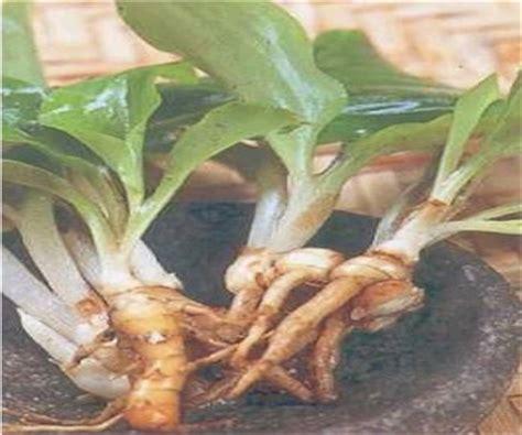 Herbal Jahe Merah Kunyit Temu Lawak jue various tempahan benih semaian buah bunga herba
