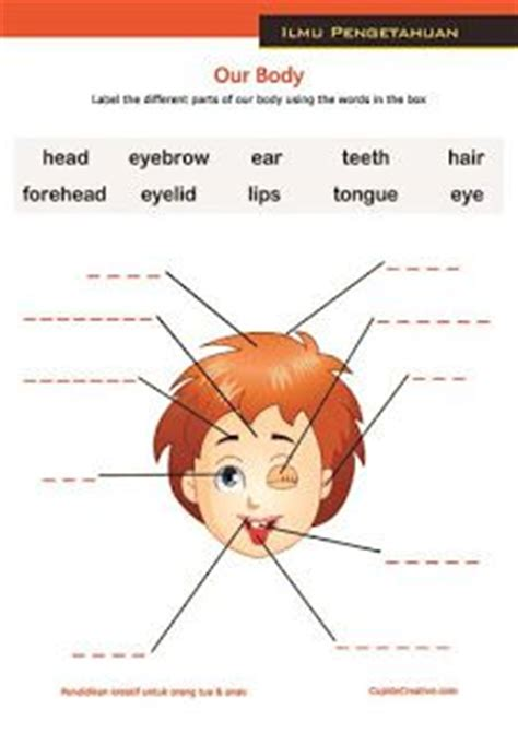 Belajar Manusia Dan Antropologi Ori lembar belajar anak sd tk mengenal dan membaca nama anggota bagian badan tubuh wajah manusia