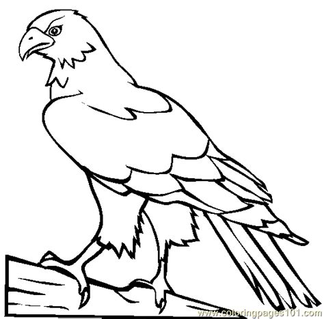 hawk coloring pages hawk coloring page free hawk coloring pages