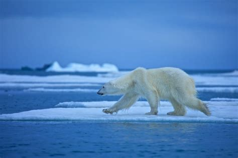experts say that global warming makes animals shrink climate change study reveals unappreciated impacts on