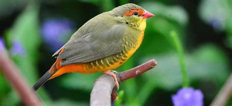 especies de pajaros silvestres pajaros de nuestros cos aves y p 225 jaros toda la informaci 243 n sobre los p 225 jaros y