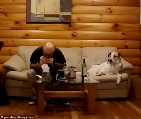 dog eating couch dog stares at owner eating but turns its head away every