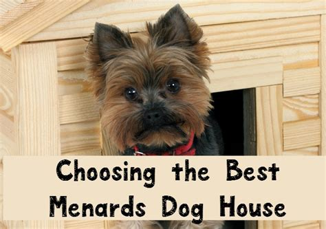 menards dog houses tips for choosing the best menards dog house