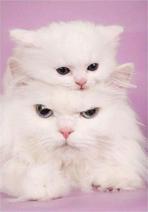 Imagenes De Amor De Gatitos Animados | im 225 genes de gatitos animados de amor para el m 243 vil