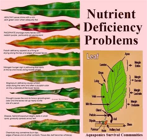 nutrient deficiency what does the leaf says about nutrient deficiency problem detect nutrient defiencies before