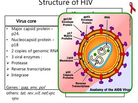 hiv virus diagram lab diagnosis hiv