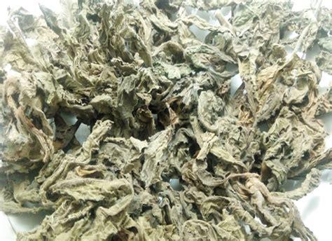 tapak liman tanaman herbal  berkhasiat sebagai