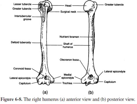 landmarks diagram colles fracture these bones of mine