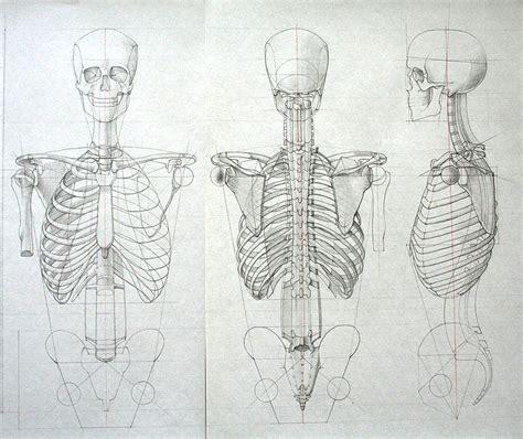 tavole anatomia umana studi di anatomia umana