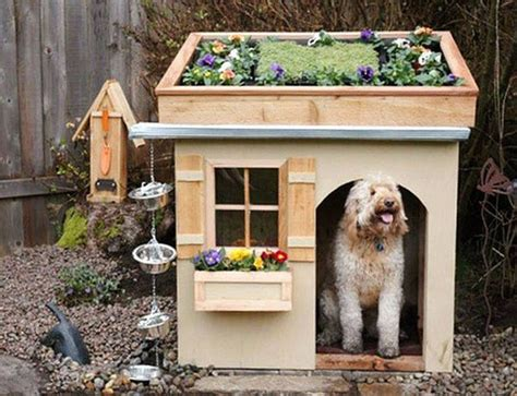 pet friendly house plans las casas para perros mas originales y creativas