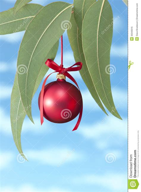 australian summer christmas tree stock image image 35343515