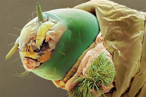 Karpet Cacing ini bukan kartun tapi gambar parasit yang berkeliaran di