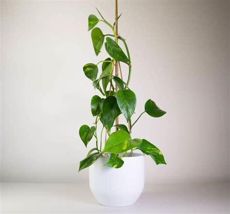 coole zimmerpflanzen 82 best cool indoor plants images on