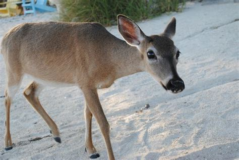deer run bed and breakfast deer run bed breakfast big pine key florida keys b