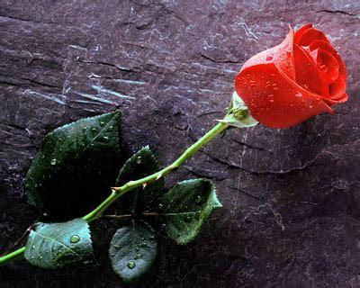 wallpaper jambangan bunga makna bunga mawar dalam lirik lagu gambar hidup