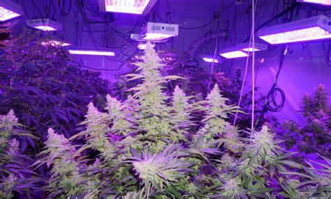 grow better cannabis with led lights best led grow