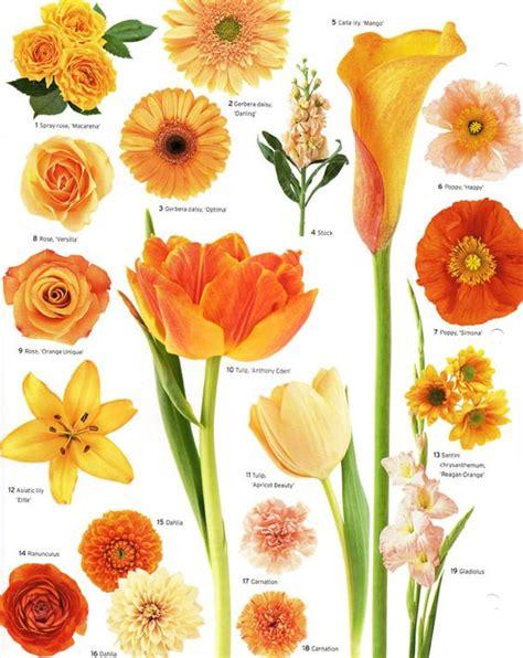 colore fiori fiori per colore il giallo e l arancione