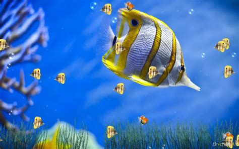 desktop themes animated free download download free marine life aquarium animated wallpaper