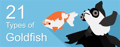 Types Of Goldfish With Names