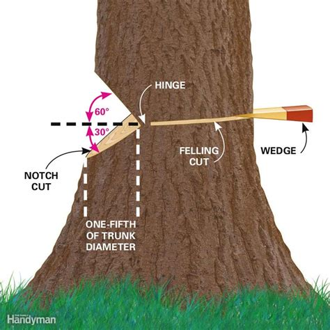 how to fell a tree in sections cut down a tree safely the family handyman