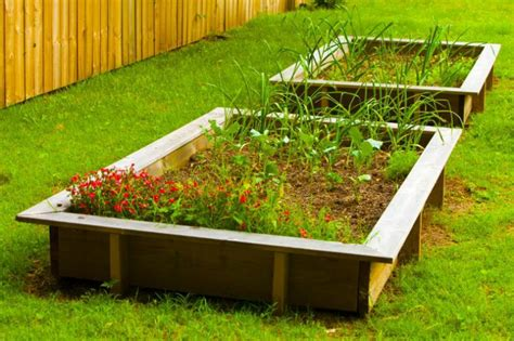 Best Vegetables To Grow In Raised Beds by Raised Beds Grow In Popularity