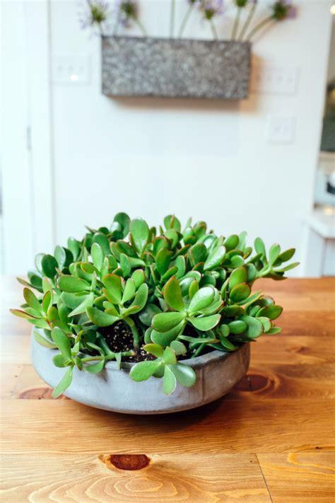 zimmerpflanzen die wenig licht brauchen 7 pflegeleichte zimmerpflanzen die wenig licht brauchen