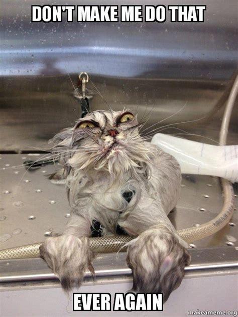 dont       cat bath returns