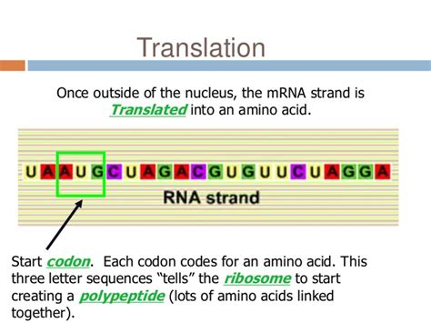 L Interpreter Login by Translation Mutation Ppt