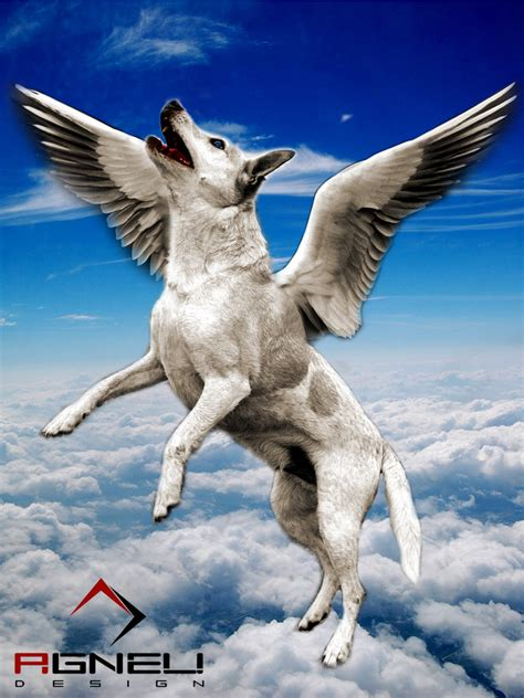 flying puppies pin flying photos pictures images on