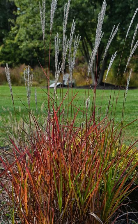 fall foliage plants best fall foliage plants the obsessive neurotic gardener