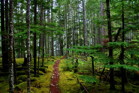 port cbell national park 2014 olympic national park calendars hikes