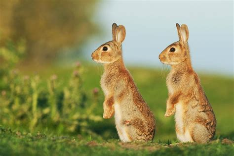british wildlife marvelous menageries 1784935514 40 animal twins you won t able to tell apart it s amazing