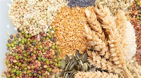 whole grains and beans what are foods healthpedia4all