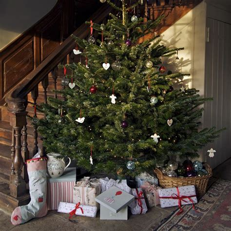 best 10 real christmas tree ideas on pinterest real