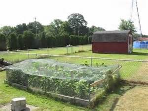keeping animals from your vegetable garden