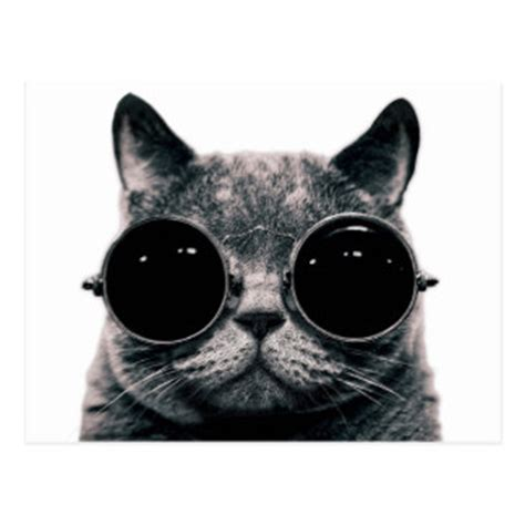 small cool cool cat cards zazzle